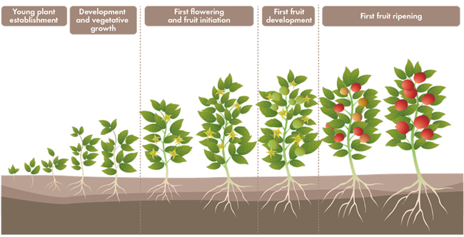 nurturing a relationship is like planting a tree No tree is an island, and no place is this truer than the forest  mycorrhizal fungi  like rhizopogon partner with plant roots because each gets.